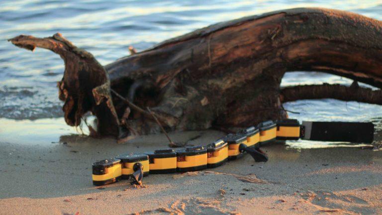 The Salamandra