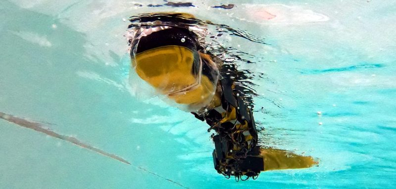 Picture of a swimming robot