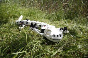 The Pleurobot